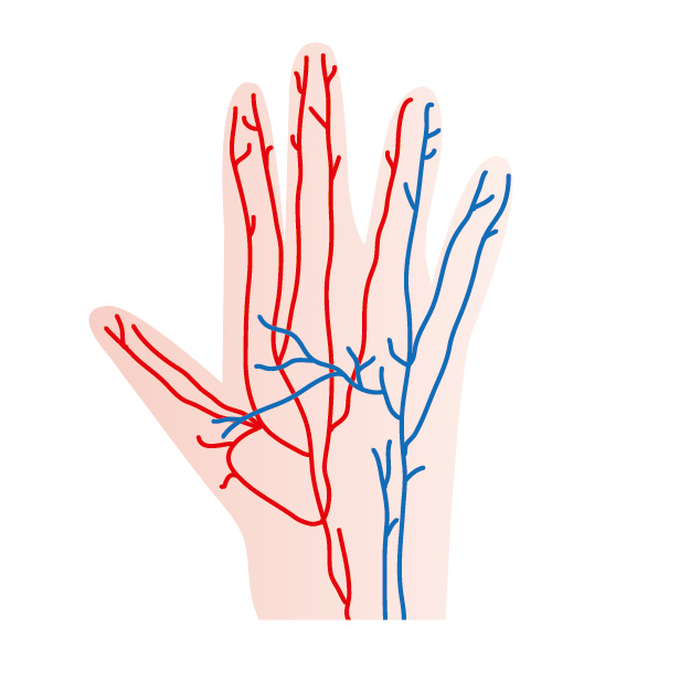 ばね指の血流低下原因